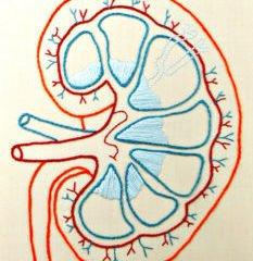 Kidney art