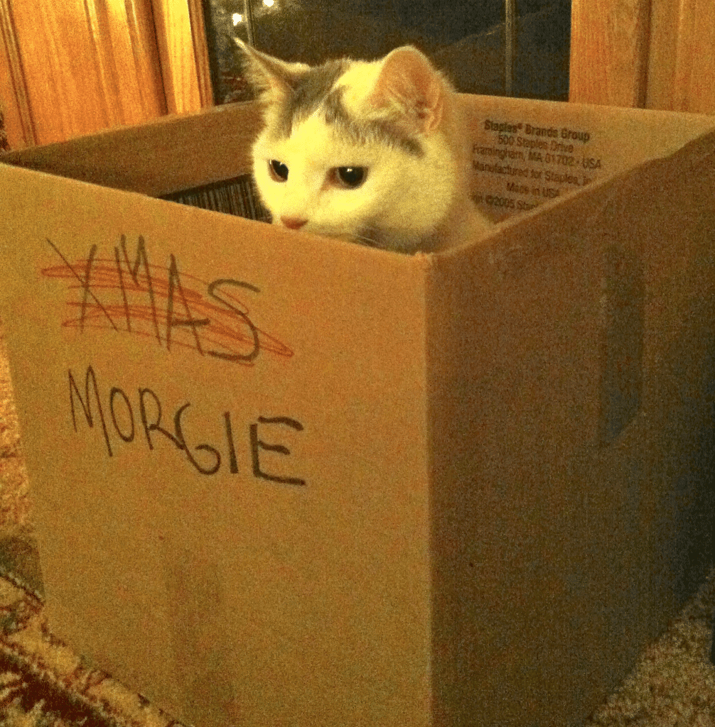 morgie demonstrates outgrowing your container